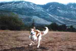 Volna Alisdan running in the mountains
